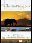 The Elephants Of Kilimanjaro