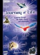 Journey Of Life (BBC)
