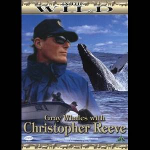 In The Wild: Grey Whales With Christopher Reeve