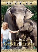 In The Wild: - Asian Elephants with Goldie Hawn