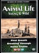 Animal Life - Episode 1, 2 & 3