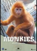 Wildlife Paradise: Monkies