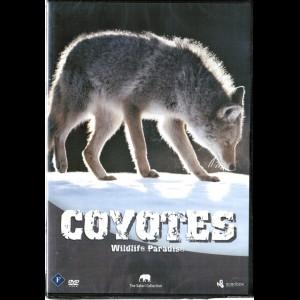 Coyotes (Wildlife Paradise)