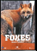 Wildlife Paradise: Foxes