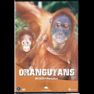 Wildlife Paradise: Orangutans