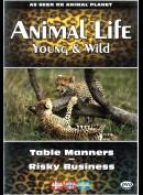 Animal Life: Young & Wild